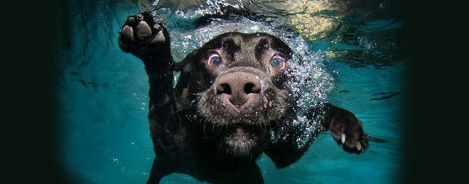 Ejemplo de foto bajo el agua