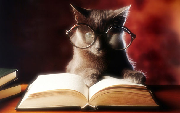 Wise Cat With Glasses Reading Book