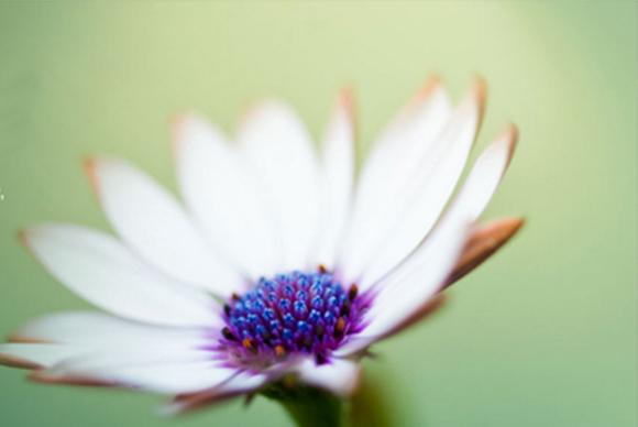 Flickr4